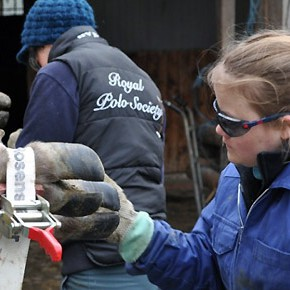 World Veterinary Year 2011: 250 Jahre Veterinär-Medizin - Vetsuisse geht zu den Leuten